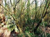 cantabros茂密的森林漆弹场在森林