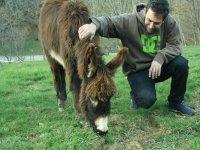 Aprendiendo más de los burros