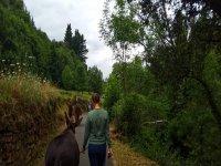 Paseo con equinos en Liébana