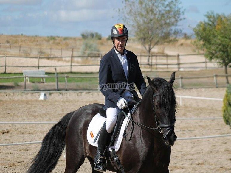 horse riding monitor