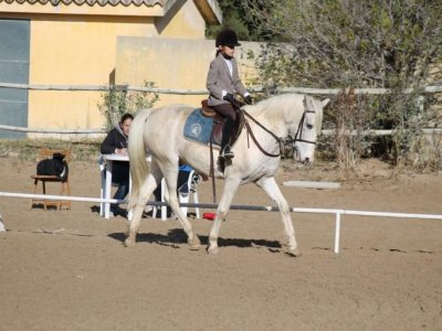 2-week Horse riding camp, Madrid