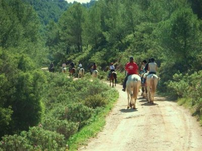 骑马的Camino de Santiago,9天