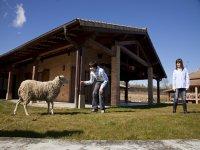 Jugando con la oveja