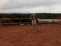 - 关于课堂上的马