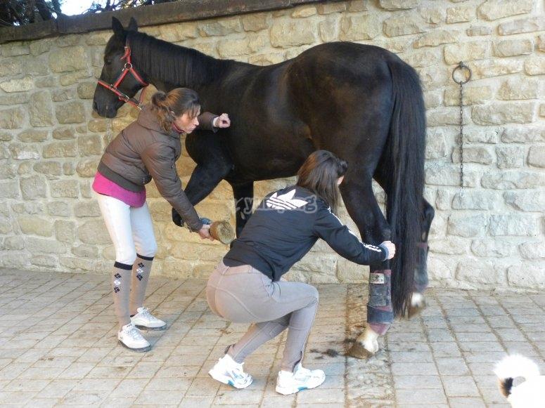 preparando il cavallo
