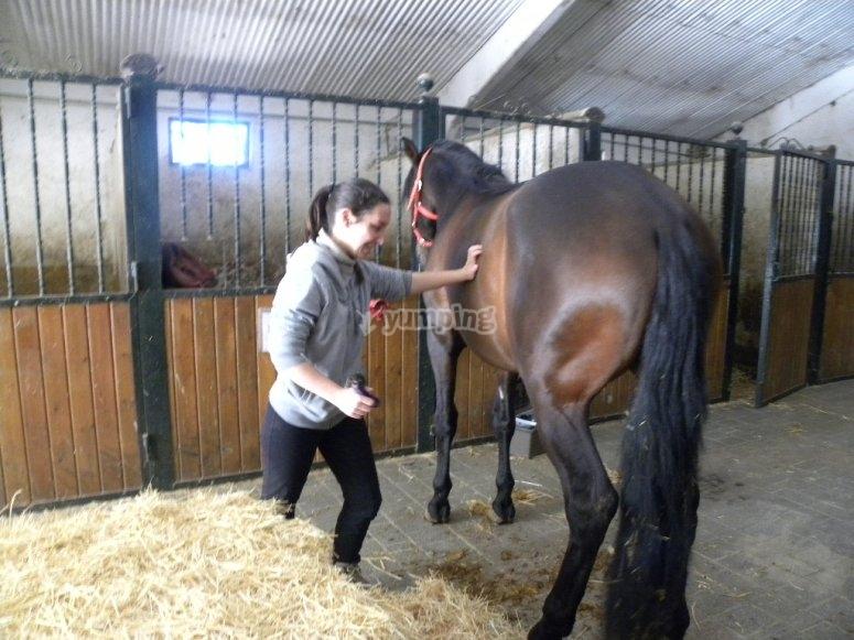 cura dei cavalli