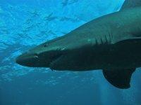 avistamiento tiburon
