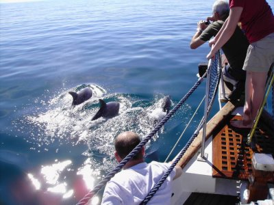 1h whale watching in Benalmádena, fee for adults