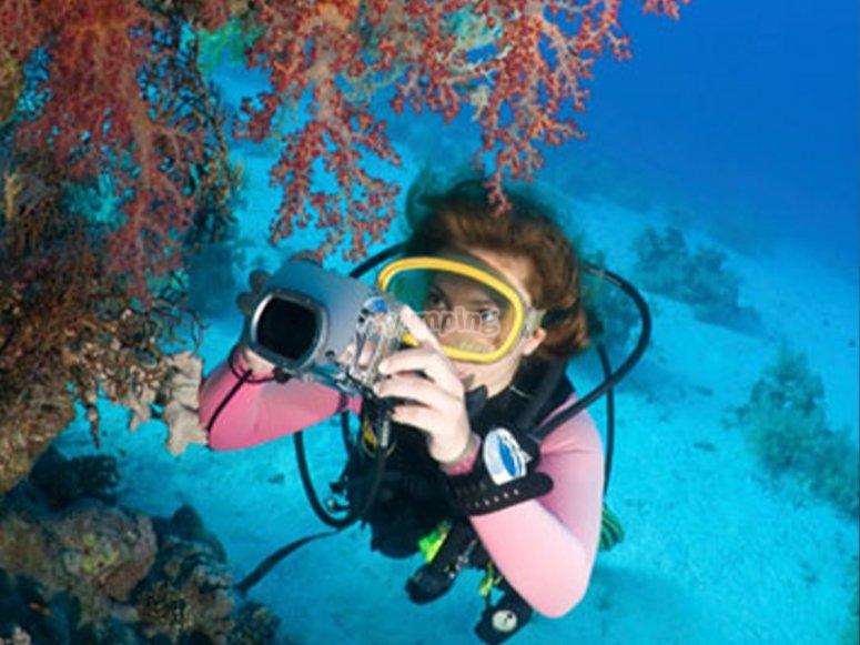 潜水了解海洋动物