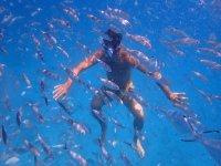Immersioni con una scuola di pesci