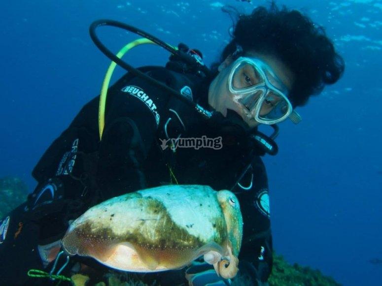 潜水与当地动物