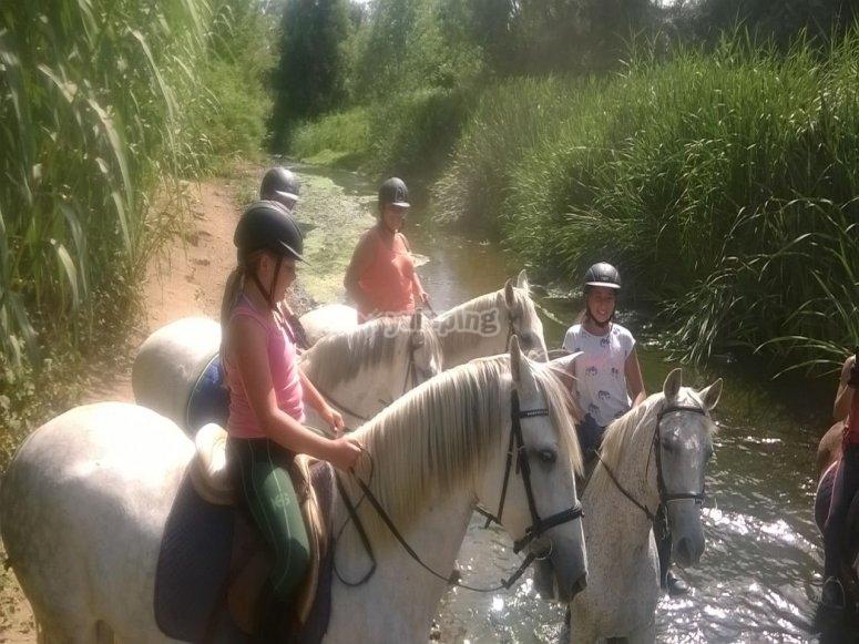 Caballos al lado del rio