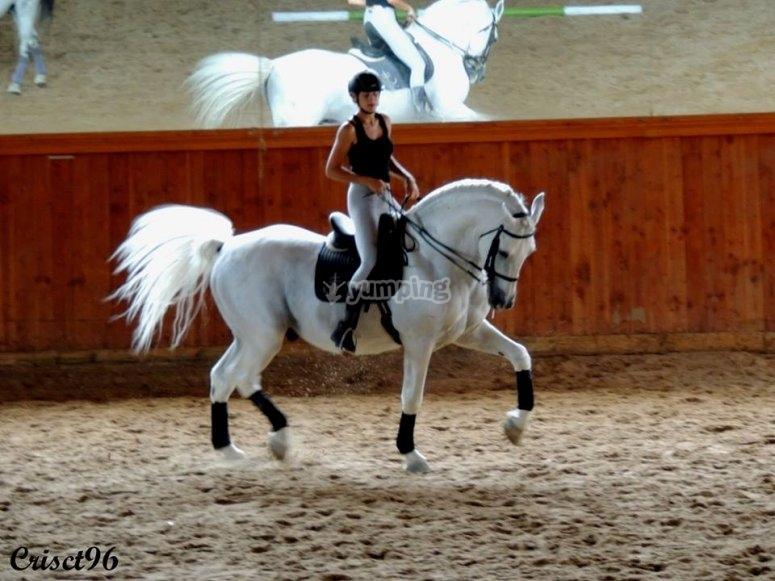 Ejercicios con el caballo blanco