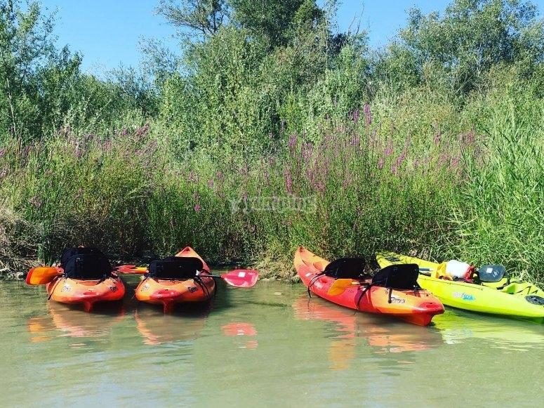 Kayaks junto a los juncos del Guadalquivir