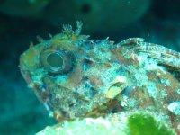Curiosos animales submarinos