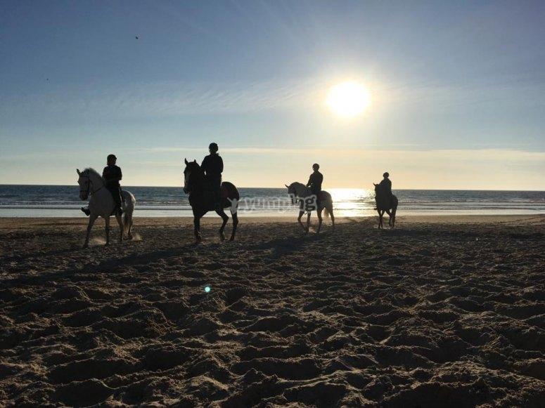 Stroll by horse through the beach
