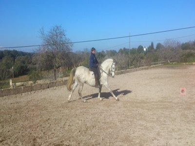 Ruta a caballo en Las Marismas, Mallorca 4 horas