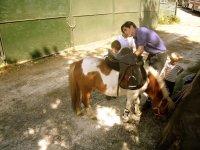 Aprendiendo sobre los ponies