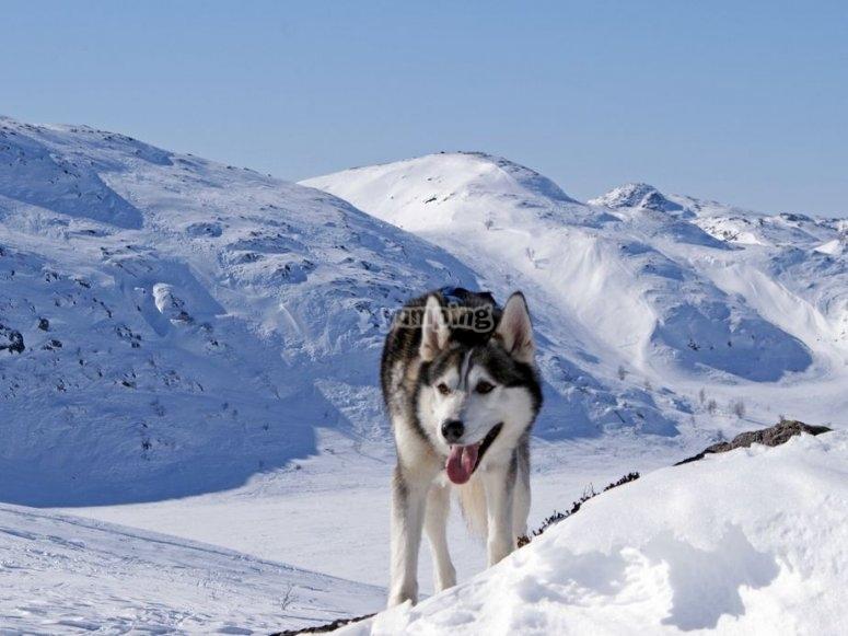 狗在雪地上