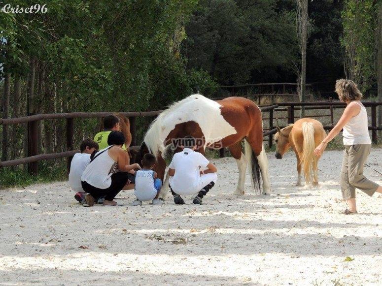 Dando al caballo de comer
