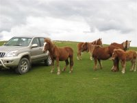 4x4 next to the horses