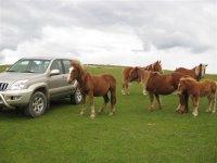 4x4 accanto ai cavalli