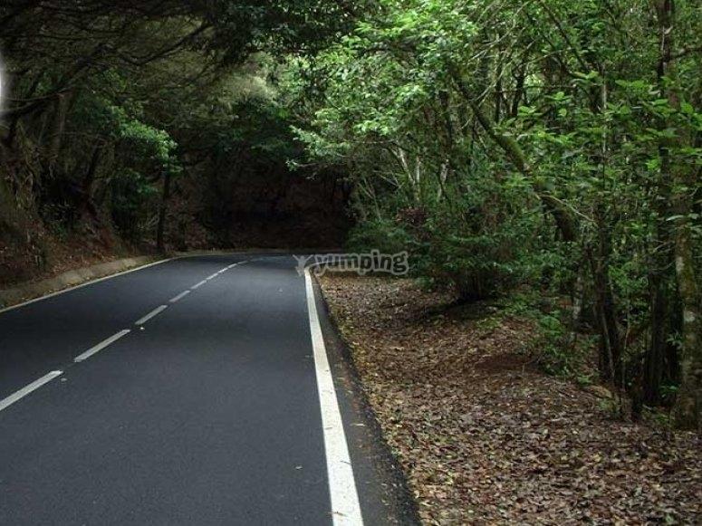 岛上的道路