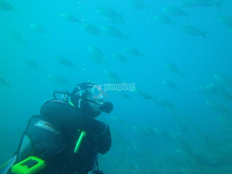 Scuba diving among the fishes
