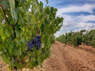 Visita alla cantina di Burgos con degustazione e alloggio