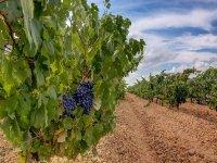 Visita a bodega en Burgos con cata y alojamiento