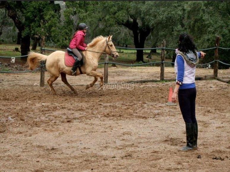 Escuela equitacion