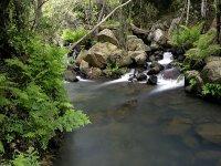 Senderismo Parque Natural de los Alcornocales 1h