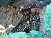 Night visit to Centro de Fauna in Navas del Rey