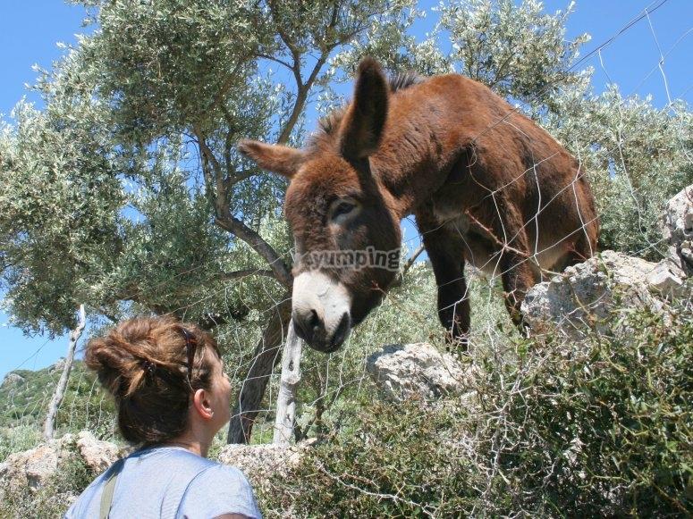 好奇的动物--999-穿越山路