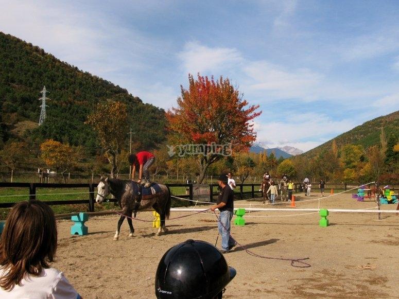 Clases de equitacion en pista