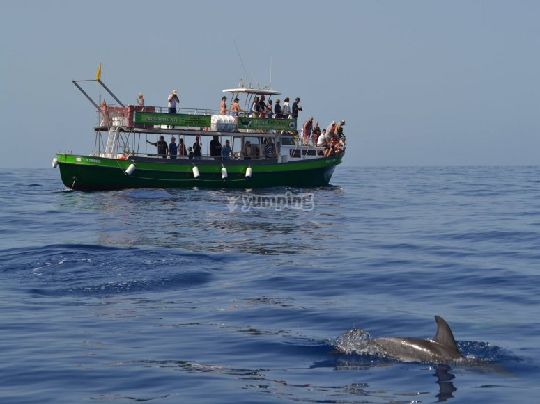 Paseo en barco por Tazacorte