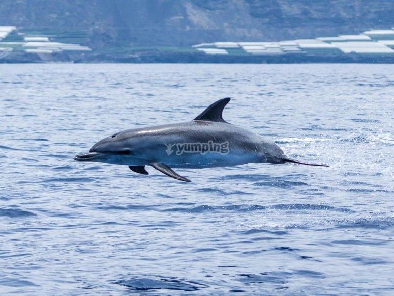 在拉帕尔马观看海豚