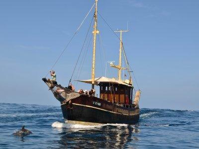 Paseo en buque velero para adultos en Tazacorte 4h