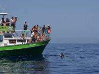 Paseo en barco y avistamiento de cetáceos