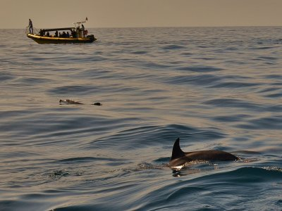 游览海豚La Palma Adults 2h