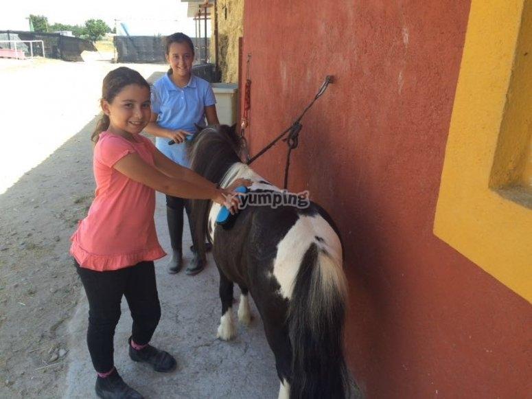 Con el poni