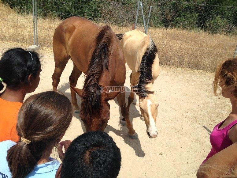 Viendo a los caballos