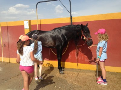 Summer Horse Riding Camp Madrid 5 giorni
