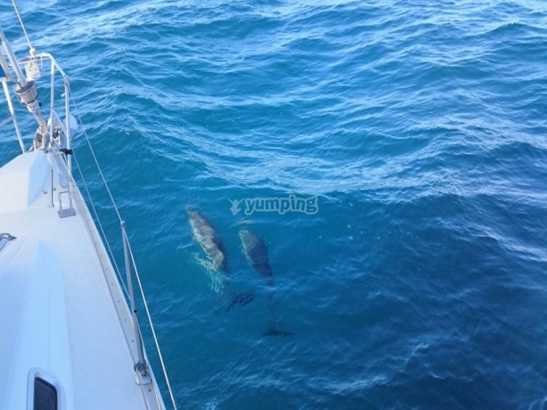 Es posible que avistemos cetaceos