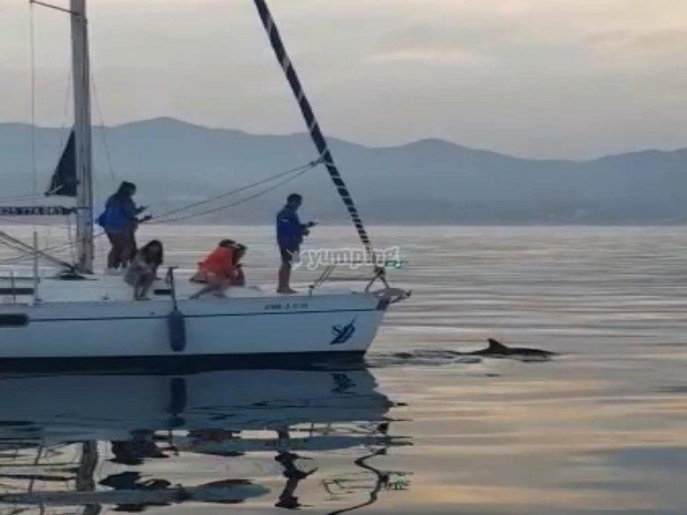Avistar delfines en paseo con velero