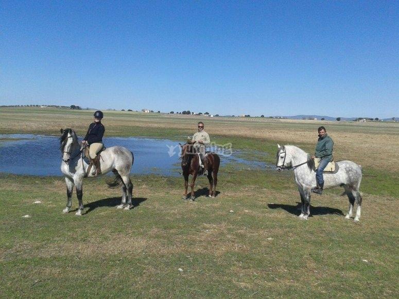 Tres caballos por Daimiel