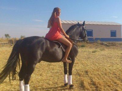 Ruta a caballo en Ciudad Real durante 2 horas