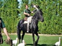 Demostración avícola sobre el caballo