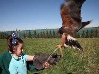Recibiendo al ave
