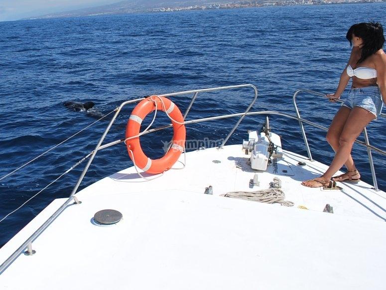 proa sol y delfines